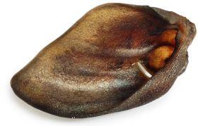 Villisiankorva Booster Chew & Delicacy, 5 kpl