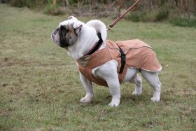 Brava Take A Walk Bulldog -teddyvuorimantteli