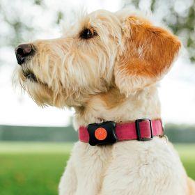 Koiran aktiivisuusseurantalaite PitPat Activity Monitor