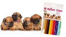 TRANSGROOM 4Pups Koiranpentujen merkkauspannat