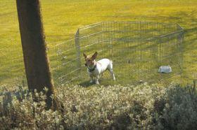 Koiran metallinen pentuaitaus 61x61 cm, 8 osaa