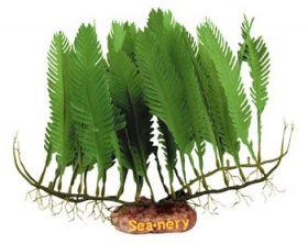 Muovikasvi SeaNery Caulerpa Mexicana 18 cm