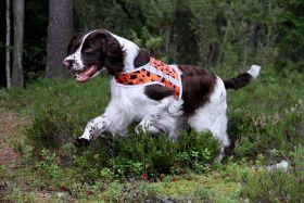 Brava BOOSTER Koiran huomioliivi, Oranssi-forest