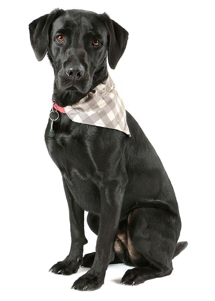 DreamPetStore | Paras koiranruoka verkkokauppa