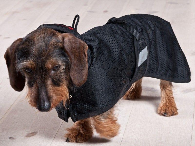 Koiran vaatteet | DreamPetStore