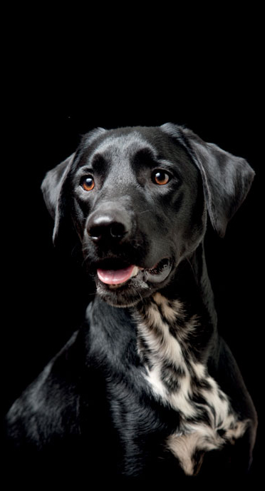 ProBooster koiran kuva | DreamPetStore