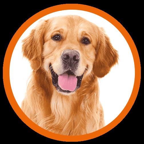 Parasta koiranruokaa - kuva | DreamPetStore