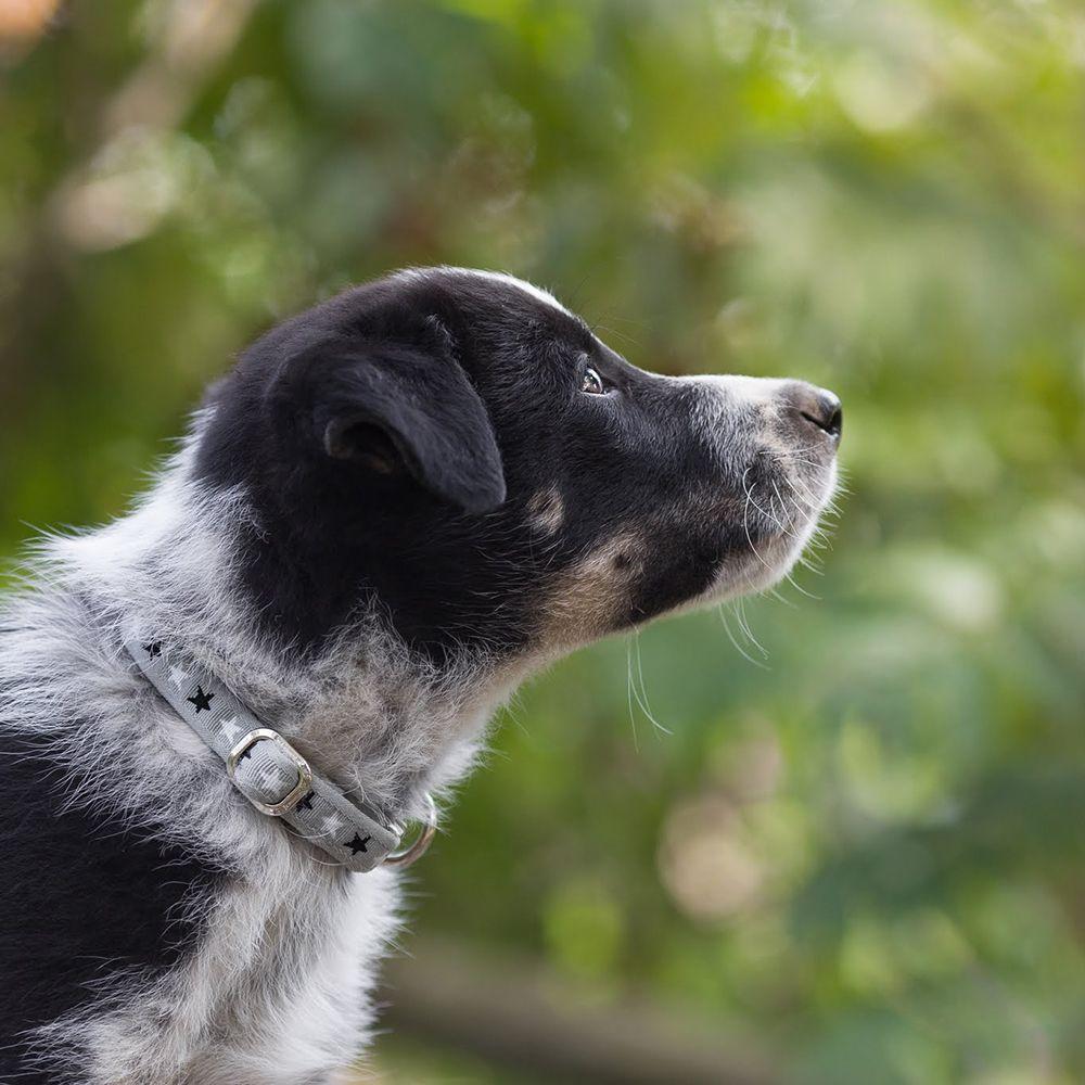 Koiran pentupanta | DreamPetStore